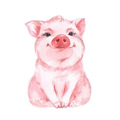 Funny pig. Cute watercolor illustration 1