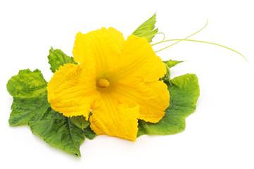 Yellow pumpkin flower.