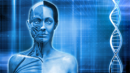 Blue medical background of a human body anatomy of a female , background with dna and waves 3d render