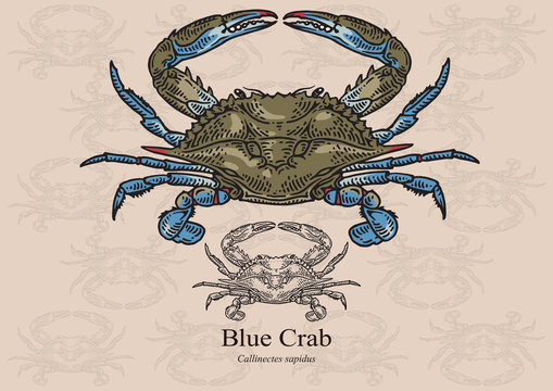 Blue crab. Vector illustration for artwork in small sizes. Suitable for graphic and packaging design, educational examples, web, etc.