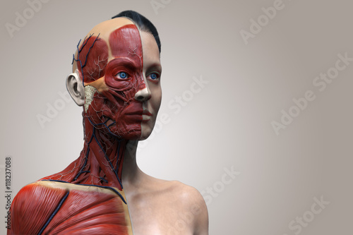Isolated Human Anatomy Of A Female Muscle Anatomy Of The Face Neck