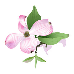 Dogwood.