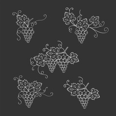Grape vine branches set vector illustrations isolated on chalkboard, hand drawn doodle sketch. Wine and wine making design elements.