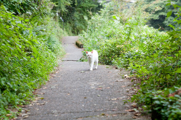 White cat who met in nature