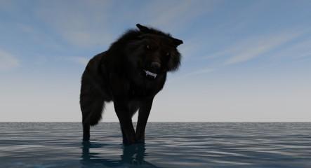Black Wolf Standing In Water 3D Rendering