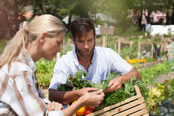 Mature couple in garden, inspecting freshly picked vegetables