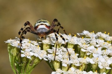 Beautiful macro shot of a spider on a flower in the wild.