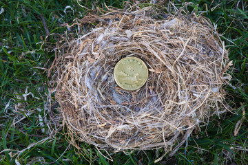 Close-up of Housefinch - Haemorhous mexicanus bird nest with Canadian one dollar coin on a green grass, Canada