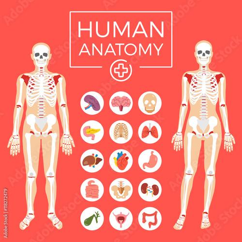 Man and woman anatomy