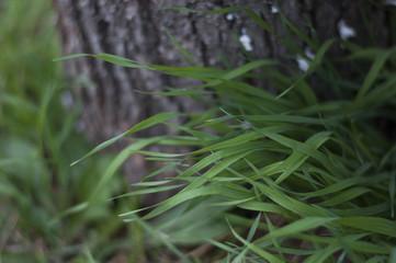 трава на фоне коры дерева