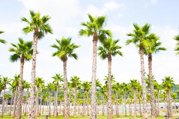 palm tree top view
