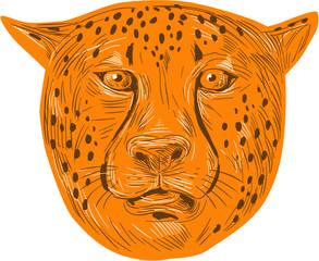Cheetah Head Drawing