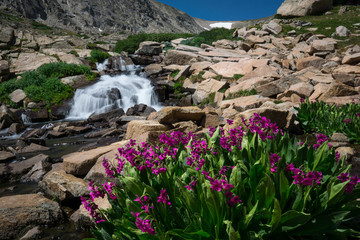 Wildflowers and Waterfalls
