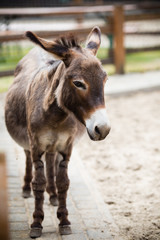 Portrait of a donkey on farm.