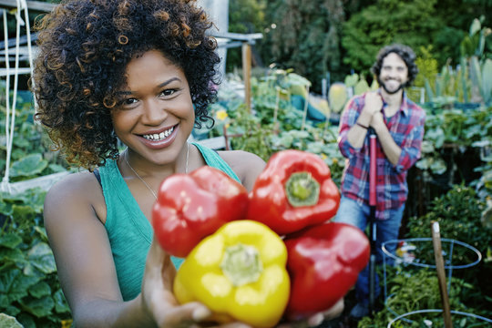 Mixed race woman picking peppers in garden