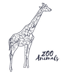 Hand drawn isolated sketch giraffe. Zoo animal. Vector.