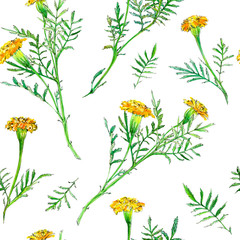 floral seamless pattern with orange marigolds flowers and branches.watercolor hand drawn illustration.white background.
