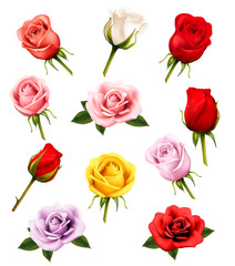 Set of different roses. Vector.