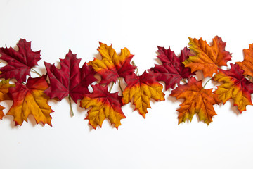 Fall Leaves isolated on a white background