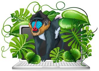 Baboon on computer screen