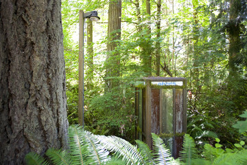 Abandoned phone booth, Kopachuck State Park, Washington, United States