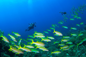 Scuba diver underwater photographer and fish