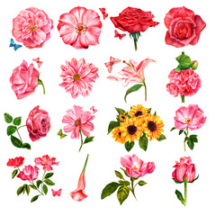 Set of many different watercolor flowers, hand painted on white