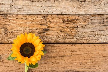 Gartenblume Sonnenblume auf Holz