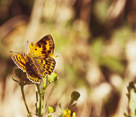 Photo of yellow butterfly on flower, on blurred background