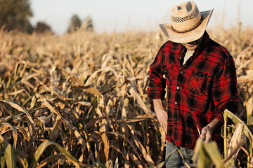 Hispanic farmer examining crops in field