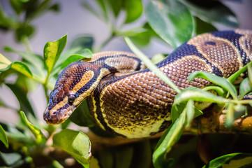 Python on a branch