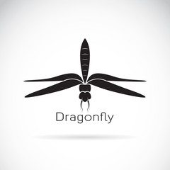 Vector of dragonfly design on white background
