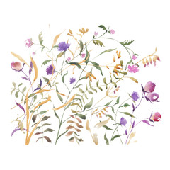 watercolor abstract wildflowers isolated on a white background