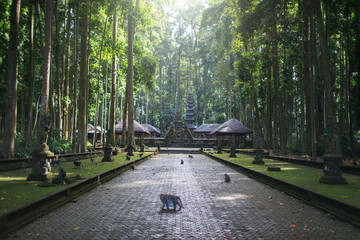 Sangeh monkey forest,temple on Bali island,Indonesia