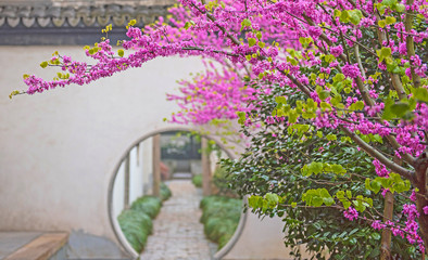 Old town of Wuzhen with nice park