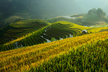 Terraced rice fields at sunset, Vietnam
