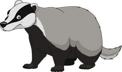 Adult funny badger