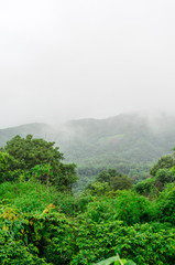 green forest with foggy in rainy season