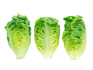 Thrre lettuce salad heads
