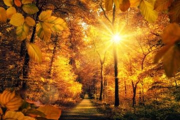 Wall Mural - Goldener Herbst mit viel Sonne im Wald lädt zu einem Spaziergang ein