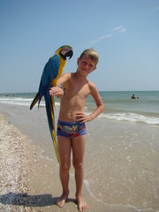 a child with a parrot on his shoulder/ child at the seaside with a parrot on his shoulder