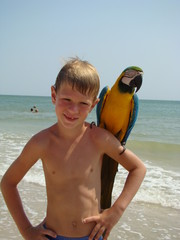 a child with a parrot on his shoulder