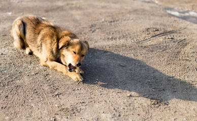 dog gnaws a bone in nature