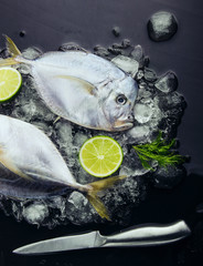 Fresh fish head and tail lime and dill on ice. Vomer or Selene s
