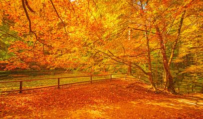 Foto op Canvas Landschappen Nice autumnal scene