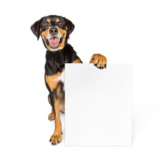 Wall Mural - Happy Big Dog Carrying Blank Sign