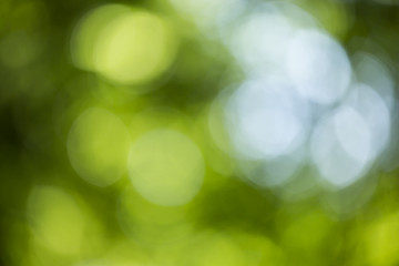 Abstract background with bokeh diffused lights of forest