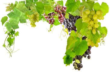 raisins et pampres de vigne  Fototapete