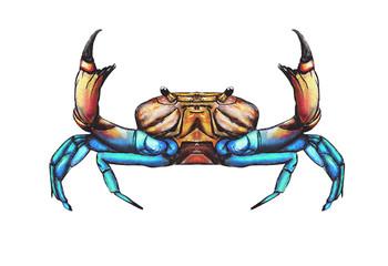 Crab-drawing
