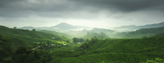 Scenery of tea plantation in Cameron Highland, Malaysia.